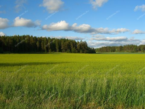 derevnya-zimenki-semenovskiy-gorodskoy-okrug фото